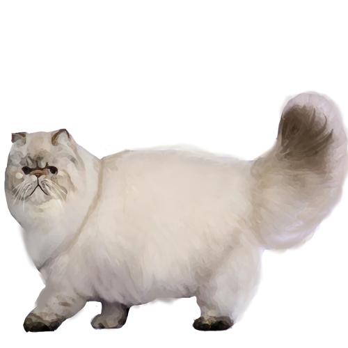 Persian - Full Breed Profile